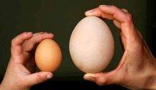 Mẹ bầu có cần thiết phải ăn trứng ngỗng khi mang thai không?