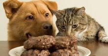 Mèo có ăn được thức ăn cho chó không?