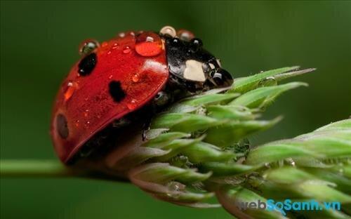 Một số mẹo nhỏ giúp bạn chụp ảnh cận cảnh các loài côn trùng