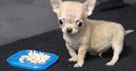 Nhóm thức ăn cho chó Chihuahua tốt nhất