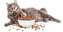 Nhóm thức ăn cho mèo luôn khỏe mạnh và nhanh nhẹn