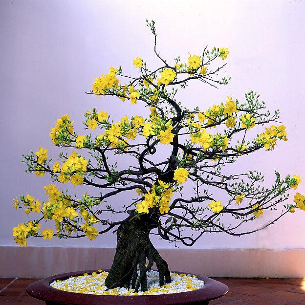 Những cây hoa truyền thống trồng chơi Tết đón xuân năm 2018