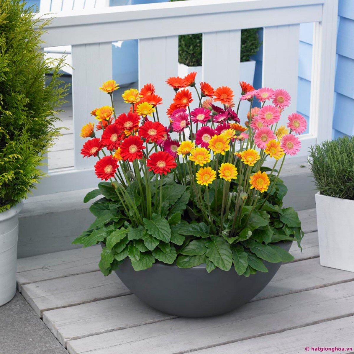 Những chậu hoa nhỏ xinh khiến căn nhà bạn sáng bừng rực rỡ trong ngày Tết