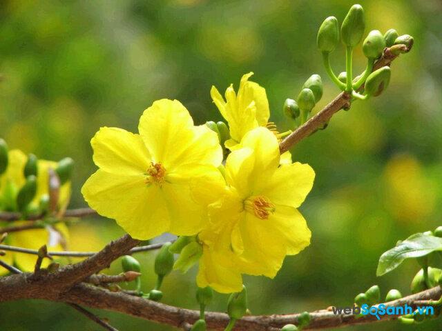 Những điềm lành và những điều người Việt cần kiêng kỵ trong 3 ngày Tết
