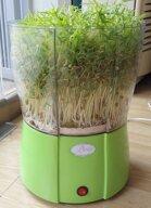 Những điều cần lưu ý khi trồng rau mầm với máy làm rau mầm
