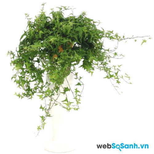 Những loại cây lọc khí tốt nên đặt trong nhà