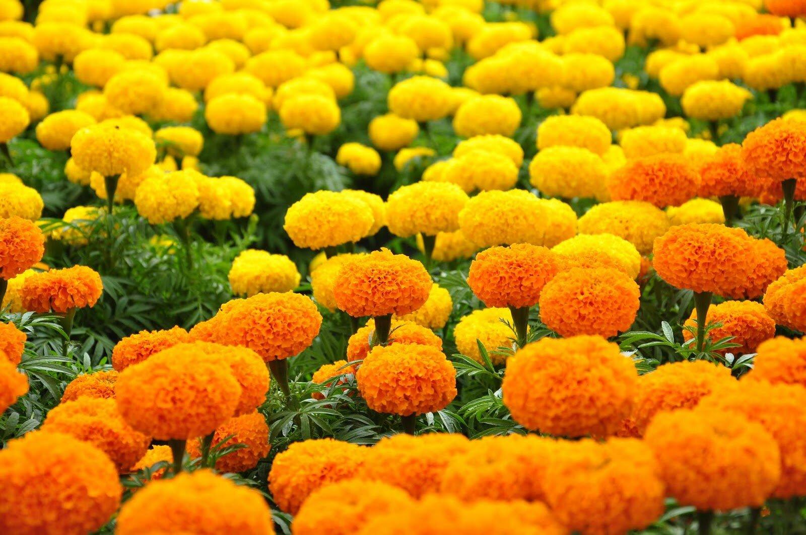 """Những loài hoa """"tuyệt đối cấm"""" được cắm trên bàn thờ ngày Tết"""
