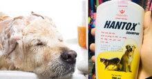 Những loại sữa tắm cho chó Alaska đáng mua nhất