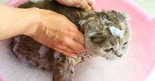 Những loại sữa tắm cho mèo tốt nhất hiện nay?