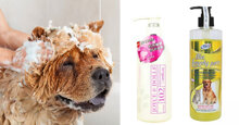 Những thương hiệu sữa tắm cho chó cảnh thơm lâu nhất