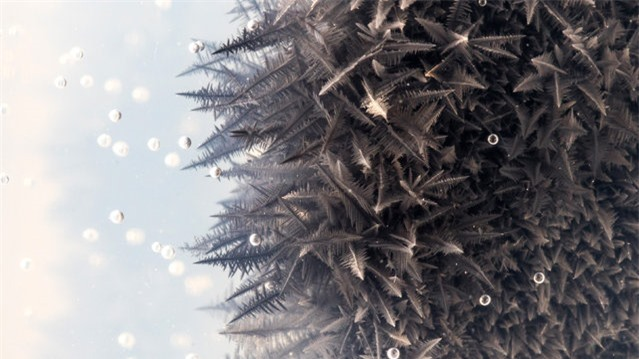 Zinc reacting with lead nitrate in a soft gel to form lead crystals. (Photo by Yan Liang/Caters News)
