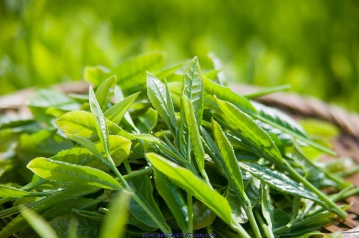Trà xanh sử dụng nhiều trong chế tạo sản phẩm làm đẹp