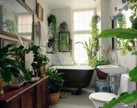 Phòng tắm thư giãn và đẹp mắt nhờ sử dụng cây cảnh