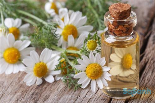 Chiết xuất hoa cúc rất nổi tiếng trong việc trị mụn, làm giảm kích ứng da