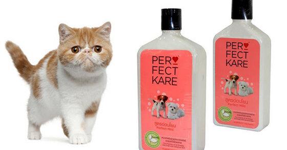 Review sữa tắm cho mèo của hãng nào tốt nhất?