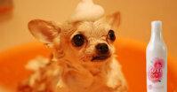Review sữa tắm hoa hồng cho chó Joyce & Dolls Rose Dew
