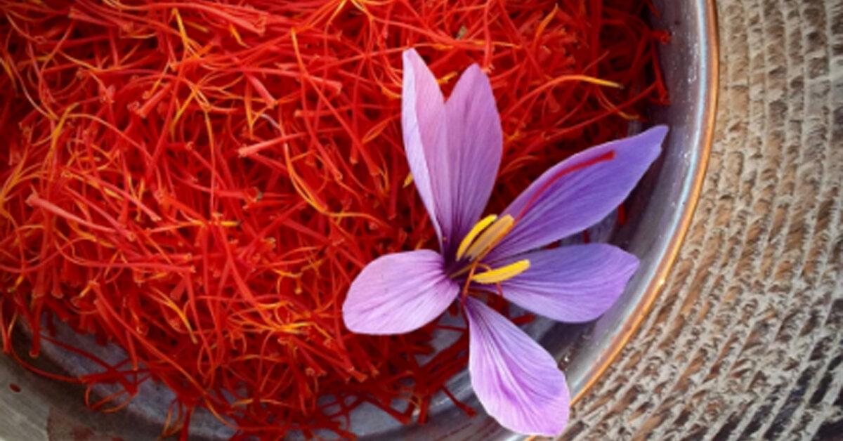 Saffron là gì ? Nhụy hoa nghệ tây có tác dụng gì ? Cách sử dụng nhụy hoa nghệ tây như thế nào ?