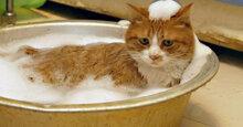 Sữa tắm diệt bọ chét cho mèo hiệu quả triệt để tới 99%