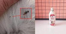 Sữa tắm diệt bọ cho mèo hiệu quả nhất hiệu nay
