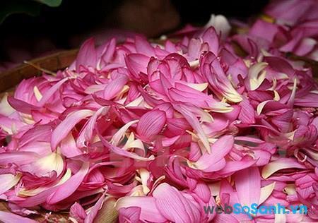 Cánh hoa sen được dùng để làm mặt nạ chống lão hóa