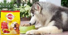 Tất cả thông tin người nuôi chó cảnh cần biết về thức ăn cho chó Pedigree