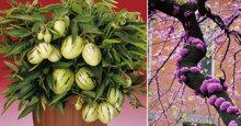 Thị trường hoa Tết : Khách chuộng những loại hoa cây cảnh ĐẸP – ĐỘC – LẠ chưng Tết