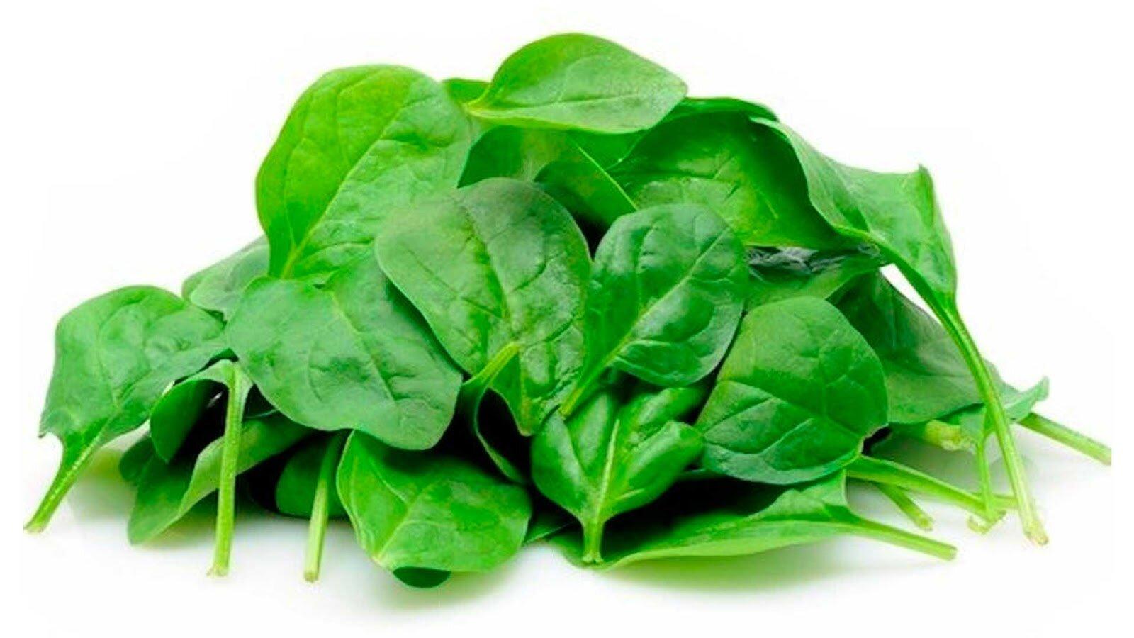 Rau mồng tơi chứa nhiều vitamin cho cơ thể mẹ bầu hồi phục nhanh