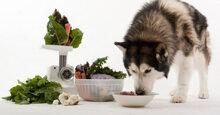 Thức ăn cho chó Husky tốt nhất nên mua ngay
