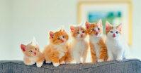 Thức ăn cho mèo con 1 tháng tuổi nên gồm những gì?