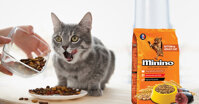 Thức ăn cho mèo minino có những ưu điểm gì?