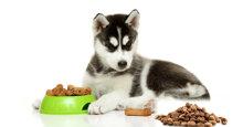 Thức ăn khô cho chó loại nào ngon và giàu dinh dưỡng nhất?