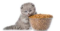 Thức ăn khô cho mèo loại nào tốt nhất?
