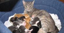 Tổng hợp tất cả các loại thức ăn khô tốt nhất cho mèo mẹ mới đẻ