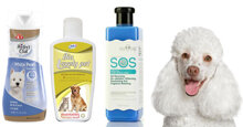 TOP 3 sữa tắm cho chó poodle trắng tốt nhất