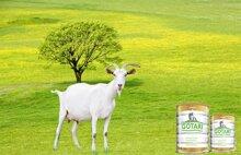 Top 5 sữa bột từ sữa dê tốt cho bé