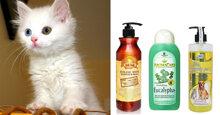 Top 5 sữa tắm cho mèo lông trắng được ưa chuộng nhất