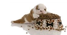 TOP 5 thức ăn khô cho chó con đáng quan tâm nhất