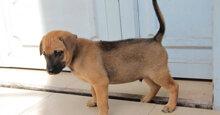 TOP 5 thức ăn khô cho chó con 1 tháng tuổi tốt nhất