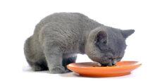 Top 5 thức ăn khô cho mèo tốt nhất