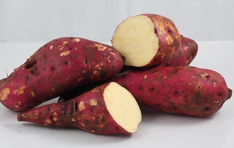Top các loại thực phẩm ngăn ngừa ung thư vú