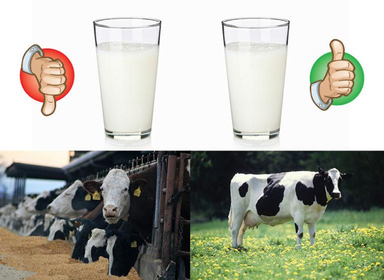 sữa công thức organic