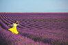 Những thiên đường hoa đẹp xao xuyến tại Việt Nam