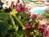 Điểm danh 4 chợ hoa nổi tiếng Hà Nội bạn cần đến trong dịp Tết