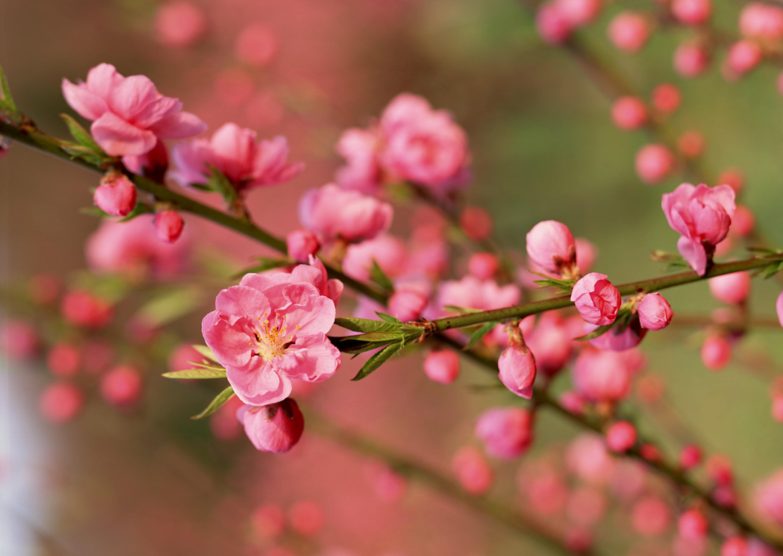 Ý nghĩa 10 loài hoa ngày Tết cho gia đình bạn