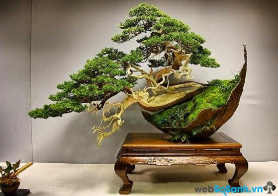 Ý nghĩa các loại cây đem lộc tới nhà trong dịp Tết?