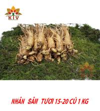 Nhân Sâm Tươi Hàn Quốc 15-20 củ/kg