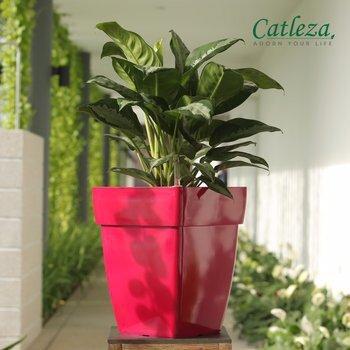 Chậu cây tự dưỡng Catleza HS18.5