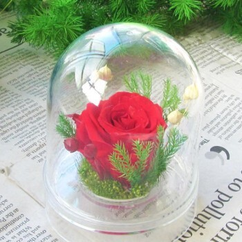 Hoa hồng bất tử – Hộp trụ