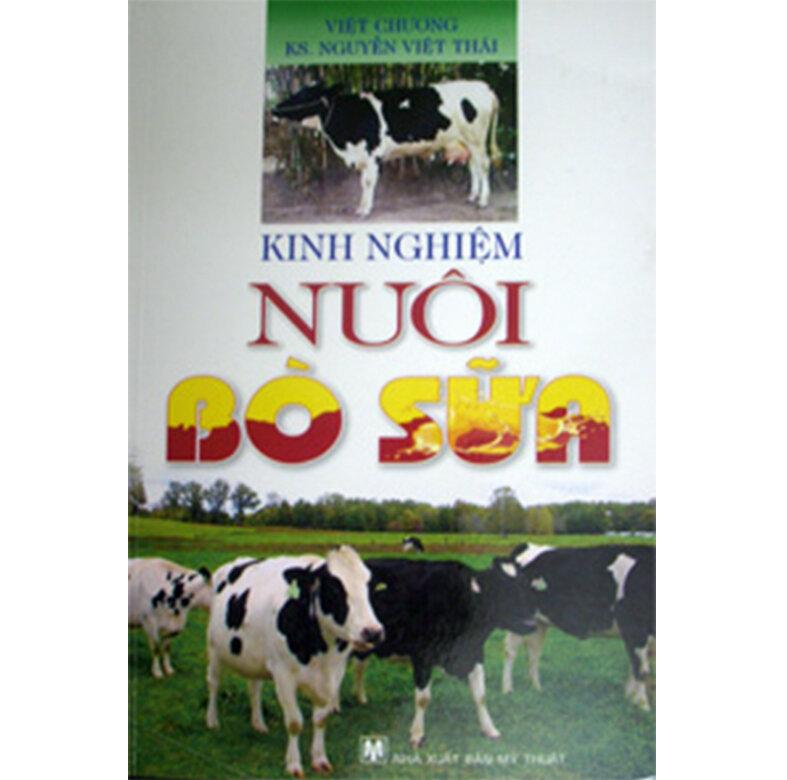 Kinh nghiệm nuôi bò sữa