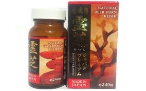 Nấm linh chi sừng hươu Nhật Bản kết hợp đông trùng hạ thảo – Tốt cho tim mạch, huyết áp